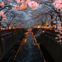 Travel wishlist: Cherry blossoming in Japan