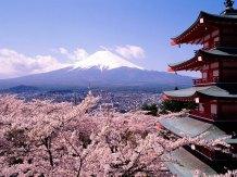 japan mountain blossom