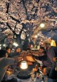 picknick blossom